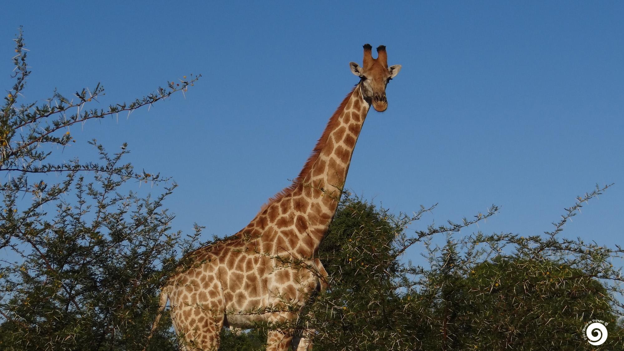 as2-accueil-M-Girafe17