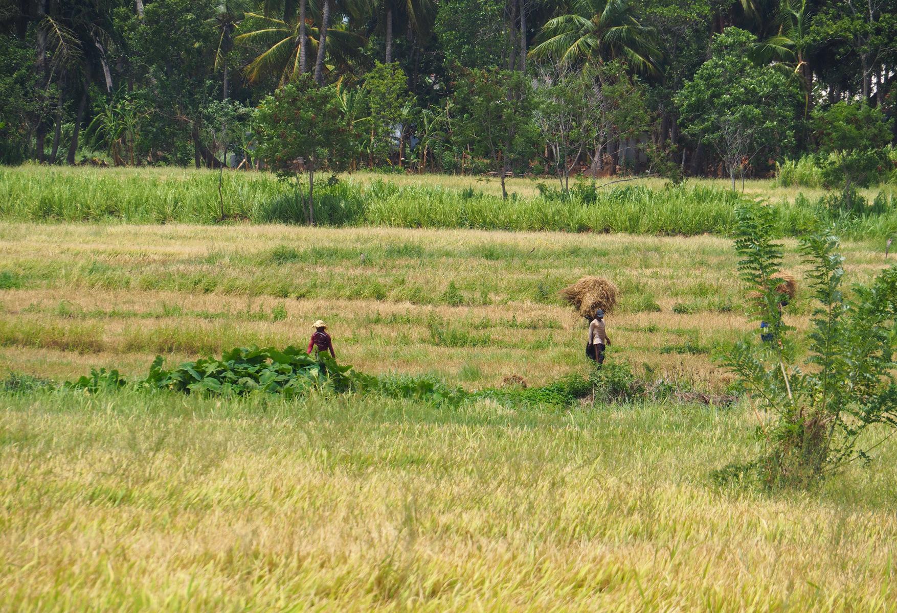 D'où l'Envie de Voyager - Sri Lanka