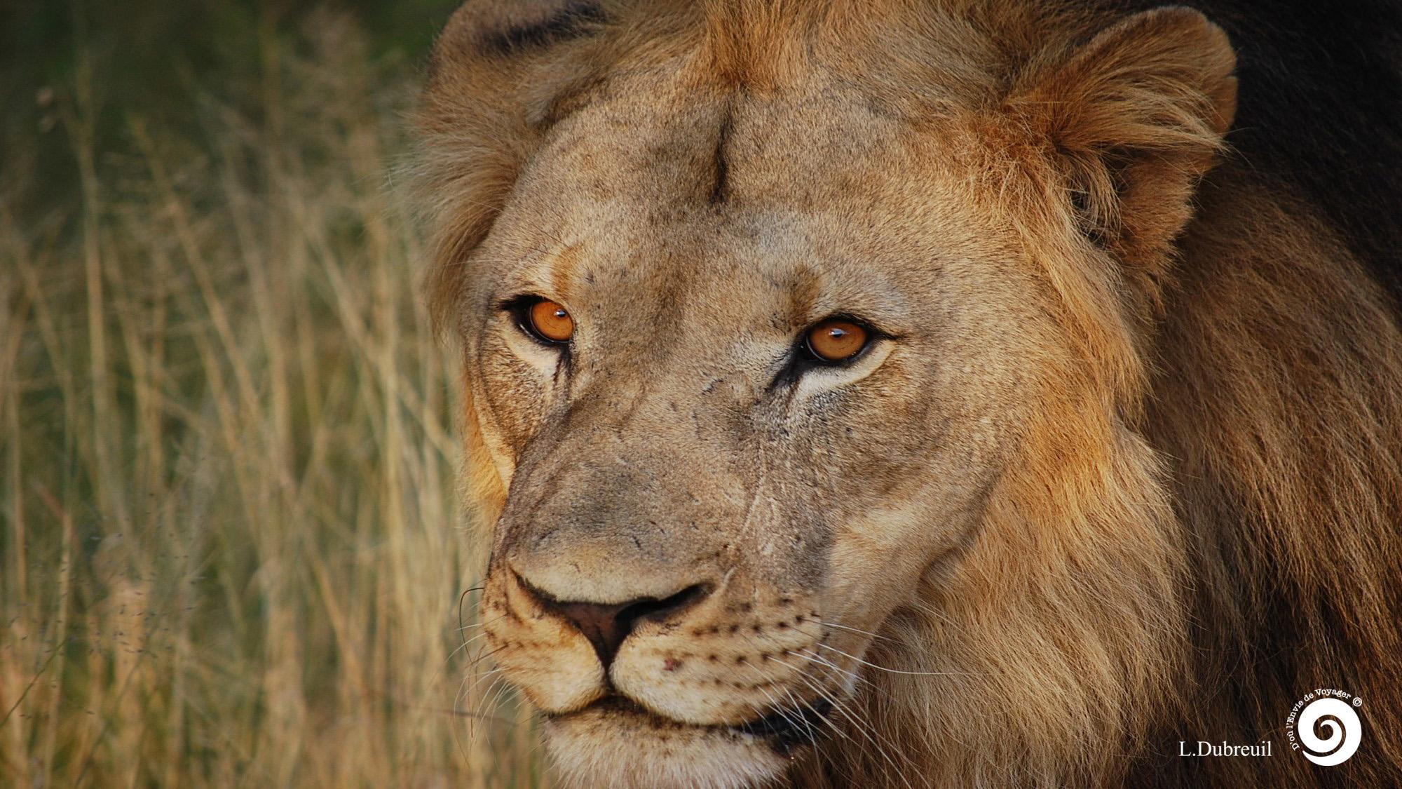 as2-accueil-Lion17