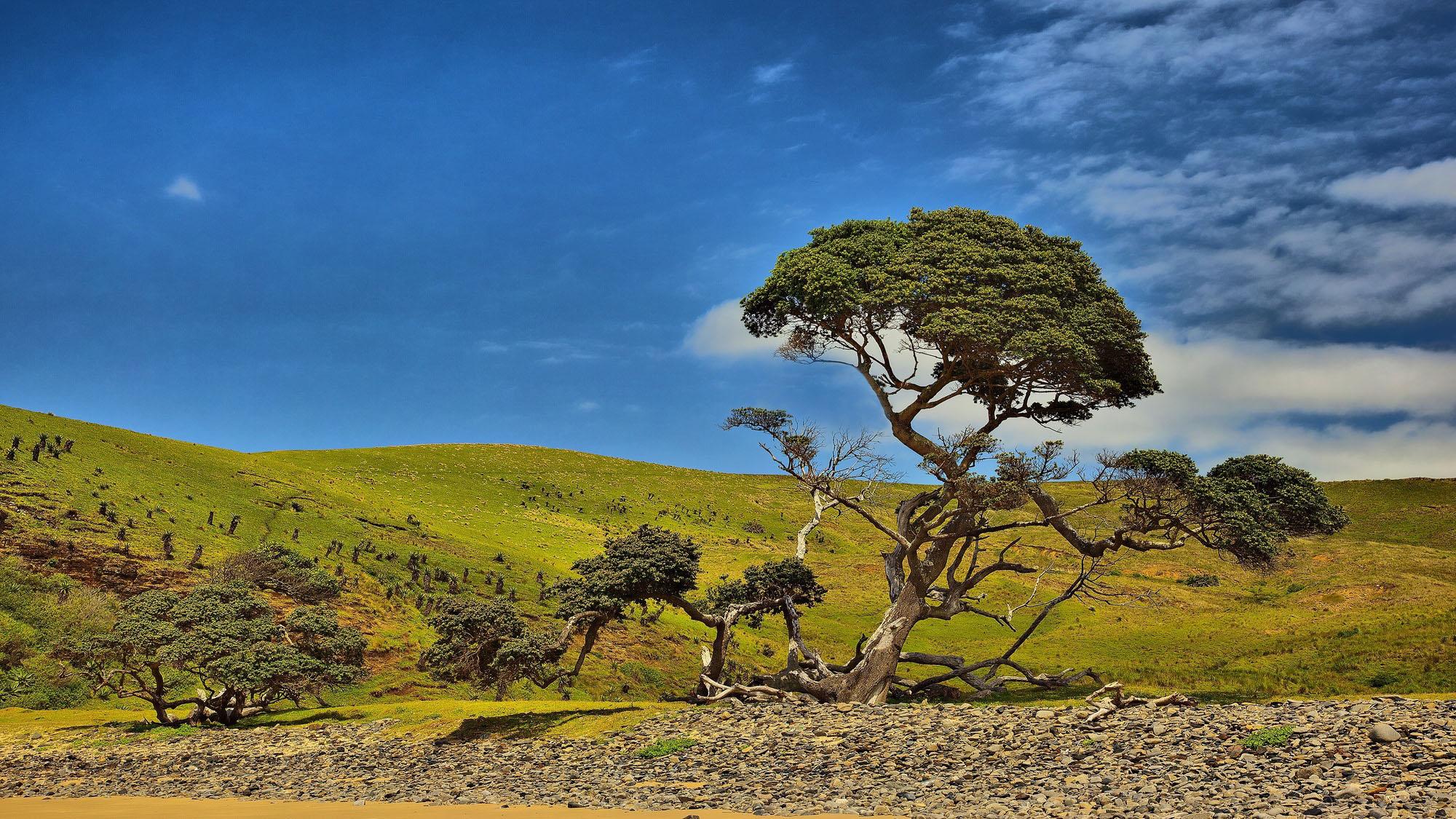 as2-accueil-P-paysage-arbre