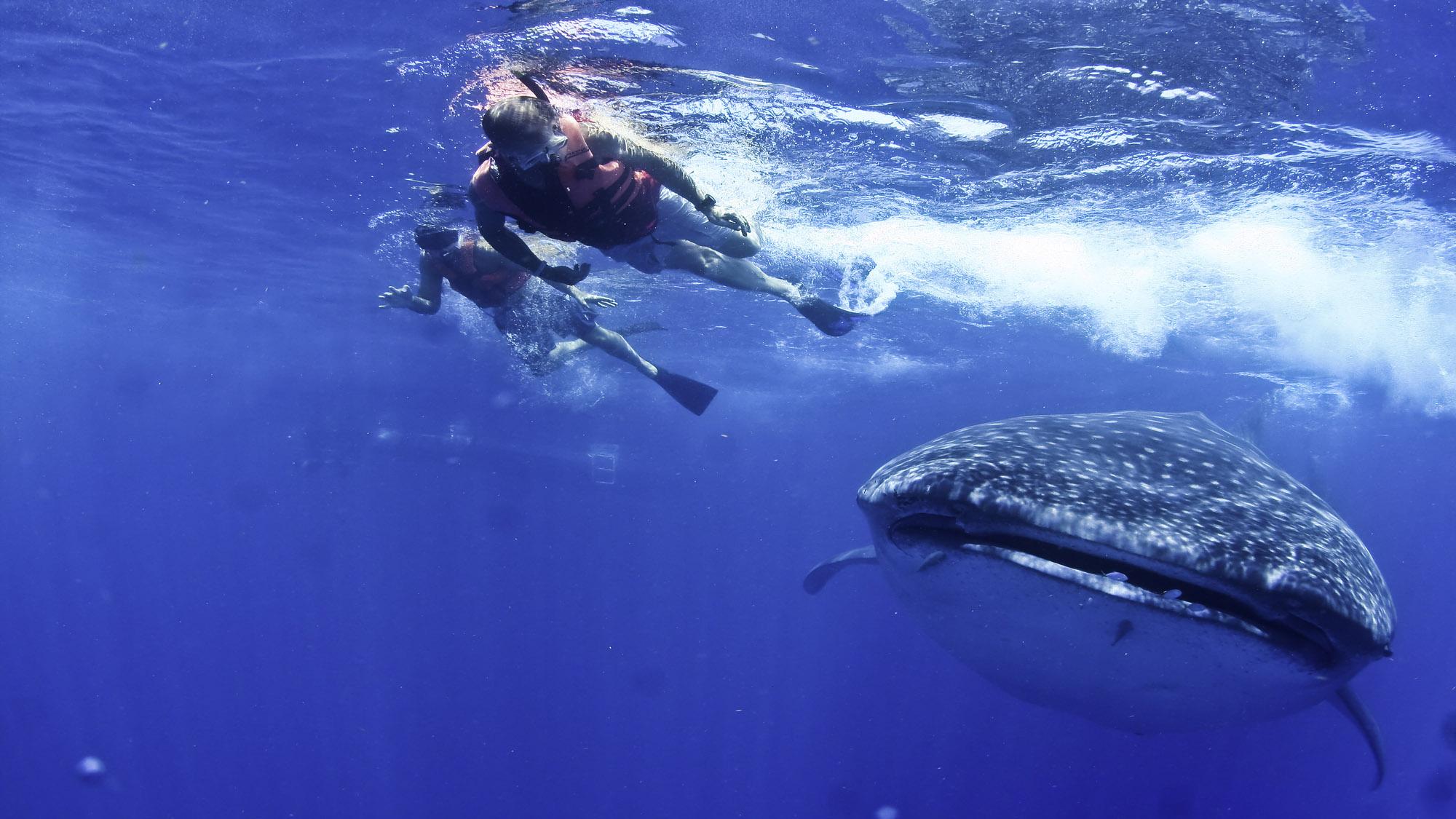 mx-Devoyager-P-Requins baleines17